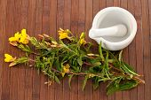 pic of primrose  - Evening primroses with mortar and pestle over wooden background - JPG