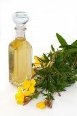 foto of primrose  - Bottle of oil with fresh evening primrose  - JPG