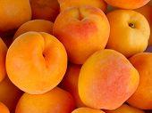 Fresh Natural Apricots