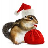 Chipmunk In Red Santa Claus Hat With Santas Bag