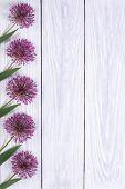 Holiday Decorating frame purple flowers alium