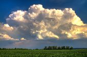 Thundercloud Over A Green Wheat Field