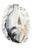 pescado fresco dorada sobre blanco - comida y bebida