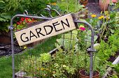 stock photo of fill  - Two raised garden beds filled with flowers and vegetables are nestled in small backyard - JPG