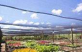 Rows Of Brightly Colored Nursery Plants Under Shadecloth