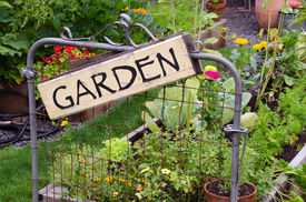 image of garden-art  - Two raised garden beds filled with flowers and vegetables are nestled in small backyard - JPG