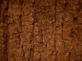 Bark Background