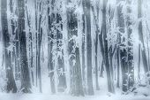 Blizzard in the frozen forest in winter