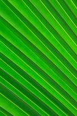 close up coconut leaf