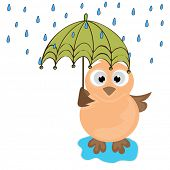 Cute illustration of an owl under umbrella in raining season.