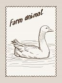 geese vector hand drawn
