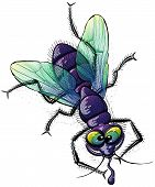 Ugly mad fly making fun of you