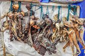 image of fetus  - Dried animal fetuses as amulets - JPG