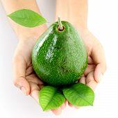 Hands Holding Avocado On White