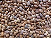 Bean grain.
