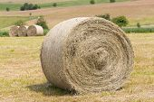 Hay Rolls In A Field Against Forest