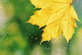 Autumn leaf on window glass close-up