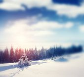 Beautiful winter panorama with snow covered trees. Retro style filter. Instagram toning effect. Tilt Shift blur effect.