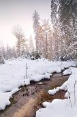 River In Winter Forest