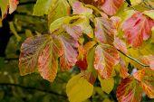 Stunning autumn leaf colour