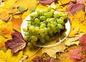 grape on autumn leaves background