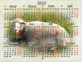 Calendar For 2015 With Sheep On The Background