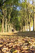 pic of ferrara  - The Walls of Ferrara during autumn with fallen leaves on the ground - JPG