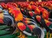 Chicken Status At Wat Yai Chaimongkol, Ayutthaya, Thailand
