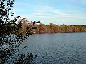 Fall tree lined pond