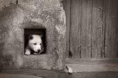 Somber Dog