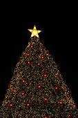 Christmas Tree With The Star