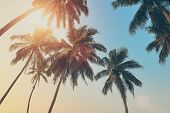 stock photo of tree leaves  - Beautiful tropical sunset with palm trees at beach - JPG