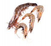 image of white-tiger  - Raw tiger shrimps on white - JPG