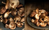 image of low-light  - Compilation of images of Fresh shiitake mushrooms in moody natural light setting with vintage style - JPG