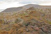 pic of scoria  - Spatter Cones and Volcanic Rock on Isabella Island in the Galapagos