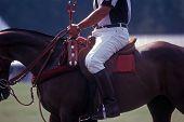 Polo official on horseback