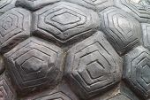 image of tortoise  - Tortoise shell is made from cement for background - JPG