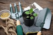 foto of household farm  - plant in black soil and gardening tools - JPG