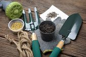 image of household farm  - gardening tools and the black soil on wooden plank - JPG