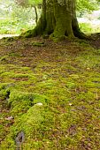 Mossy Ground With Tree Trunk