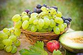 stock photo of grape  - Grapes  - JPG