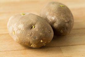 pic of germination  - Germinating potato - JPG