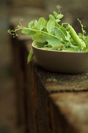 foto of pea  - brown ceramic bowl with open green peas on old wood - JPG