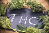 Medical marijuana background with cannabis leaves and buds sorrounding the word THC hand written on  poster