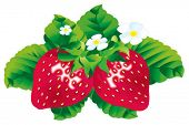 Vector image of strawberries