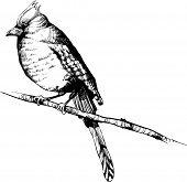 mão-desenhar vetor ave - ilustrações de pássaros vintage