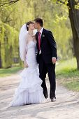 picture of wedding couple  - Colorful wedding shot of bride and groom kissing - JPG