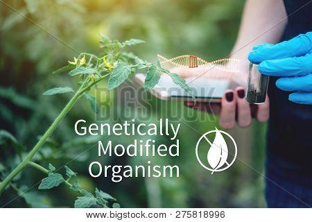 Woman Scientist Genetic Engineer Testing