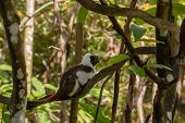 Cotton Top Tamarin Monkey - Saguinus Oedipus -sitting On A Tree Branch poster