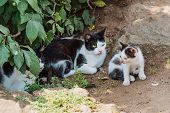 Cat Family Walking Together On Nature. Street Cats poster